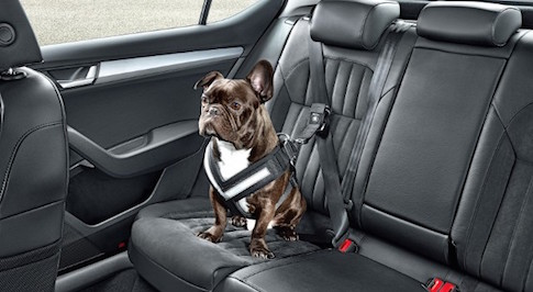 Skoda release in-car safety devices for dogs
